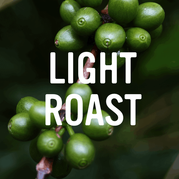 light roast category