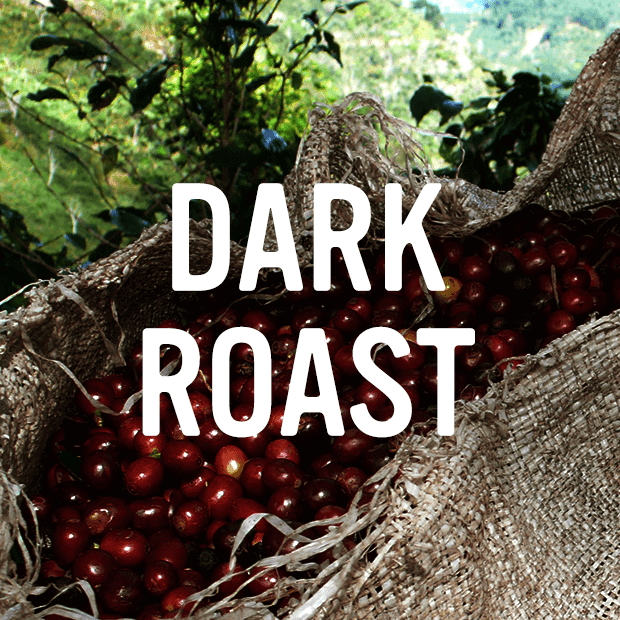 dark roast category