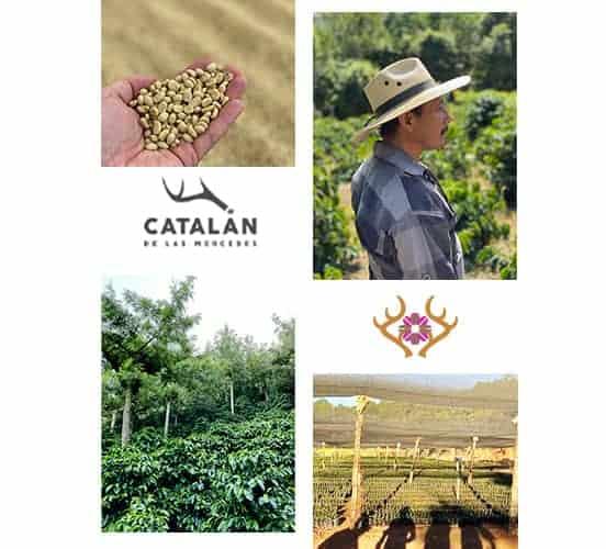 Guatemala Catalan de las Mercedes has a story as unique as the farm it comes from