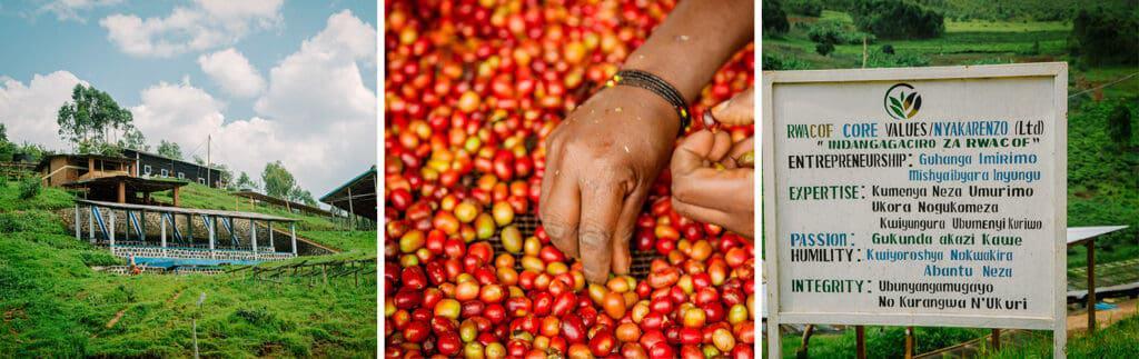 Rwanda Nyakarenzo Coffee Farm